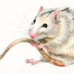Эскиз тату крысы реализм