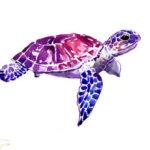 Эскиз тату цветной черепахи