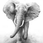 Фотореалистичный эскиз слона