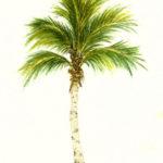 Эскиз тату с пальмой, реализм