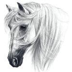 Эскиз тату головы лошади в стиле реализм