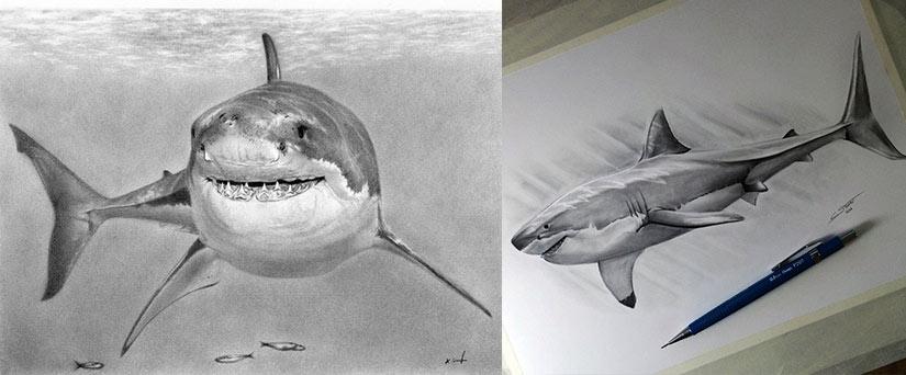 Эскиз тату с белой акулой
