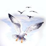 Эскиз чайки для тату, чайка в небес фоном