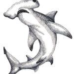 Эскиз тату акулы молота