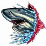 Эскиз головы акулы