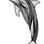 Эскиз дельфина контурами