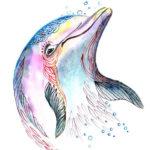 Эскиз головы дельфина