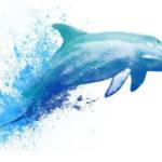 Мужской эскиз тату дельфина в стиле акварель