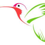 Эскиз тату колибри в два цвета
