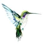 Эскиз тату колибри