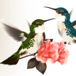 Эскиз тату колибри парят над цветами
