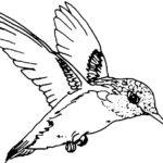 Эскиз тату колибри контур