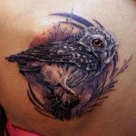 Тату сова на спине