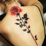 Роза вдоль позвоночника