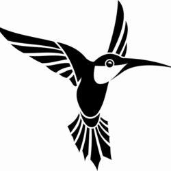 Черно белый эскиз тату колибри
